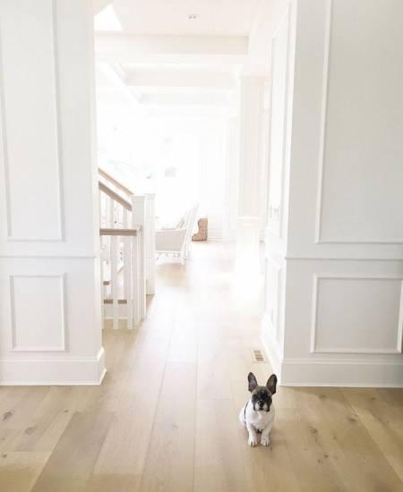 hardwood-flooring-and-pets